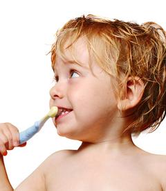 乳歯の特徴とむし歯の予防